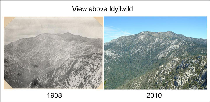 """""""Because there was so much logging in Strawberry Valley in the late 1800s, the landscape used to be more open, evident in the photos above. Also note that 2010 depicts more vegetation at higher elevations, which we think may be due in part to the gradual warming of average temperatures in the mountains,"""" Dr. Jennifer Gee wrote. Photo (left) by Joseph Grinnell (1908) and photo (right) by Dr. Lori Hargrove (2010)"""