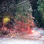 Large branch falls, lands on car, causes power outage