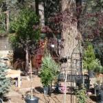 Business Changes: Four Seasons Nursery returns