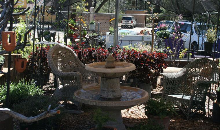Lily Rock Native Gardens, resplendent, days prior to season opening. Photo by Marshall Smith