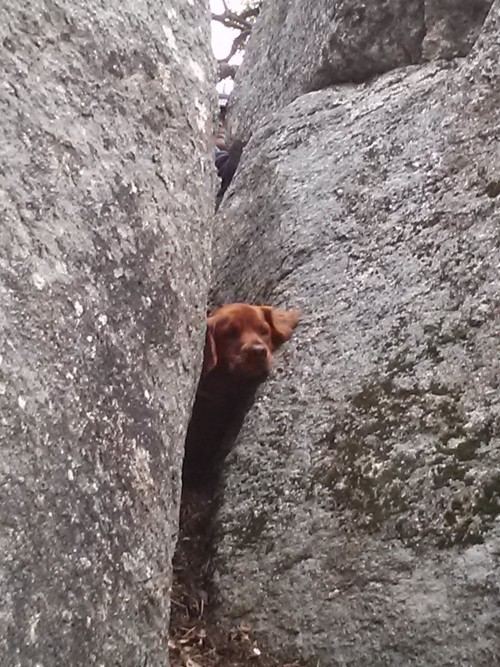 Aslan trapped between two boulders. All photos by Robert Hewitt