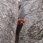 Dog rescued from jaws of boulders