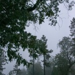 Saturday's rain breaks oppressive heat