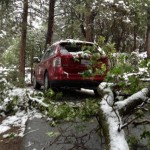 Tree branch causes damage