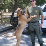 Sheriff's K9 training in Idyllwild