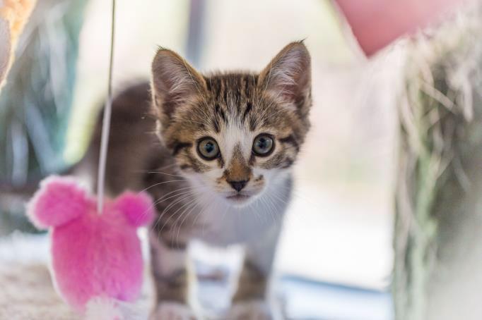 critters-kitten2