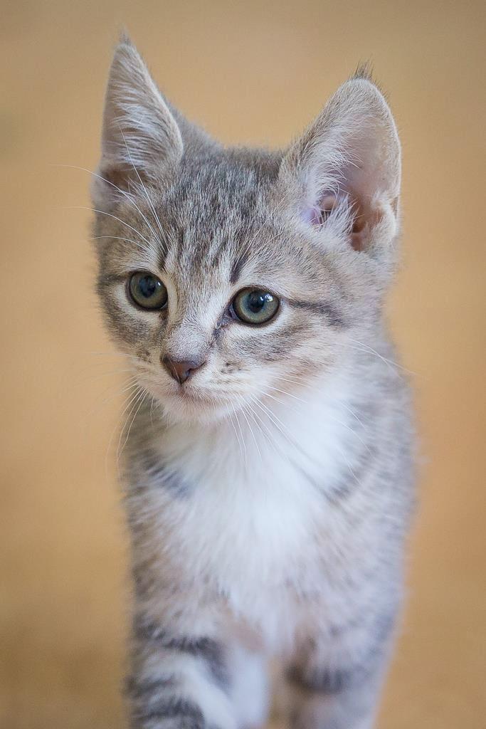 critters-kitten3