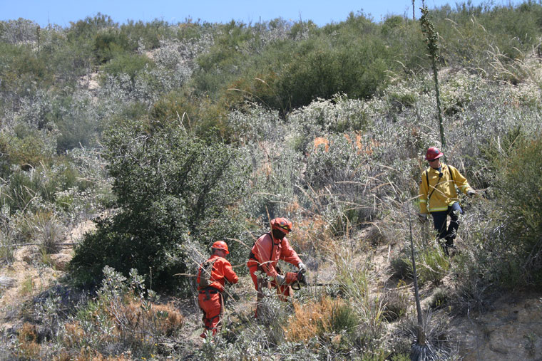 A two-man crew supervised by Cal Fire Capt. Dan Faulkner thins brush on the Poppet Flat Truck Trail. Photo by Marshall Smith