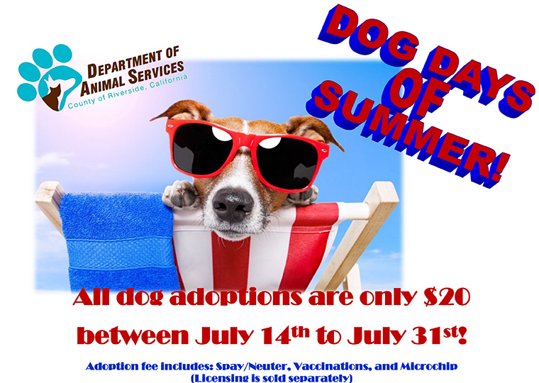 Dog Days of Summer-promotion
