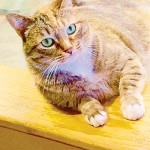 Sunny the cat retiring from Nature Center