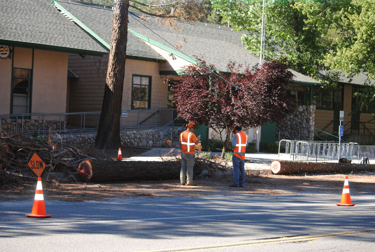 Last week, several dead and dying trees, including sequoias planted in the late 1940s, were removed from the front of the Idyllwild School. Photo by J.P. Crumrinex