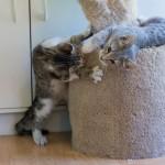 critters-rhett-and-gatsby