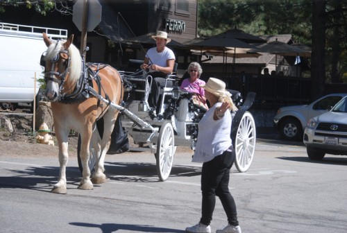Rexie Mishler of Bighorn Carriage Company controls traffic as the carriage enters N. Circle Drive during Saturday's Art Walk and Wine Tasting. Photo by JP Crumrine