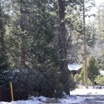 Tree falls; power still out to Fern Valley homes