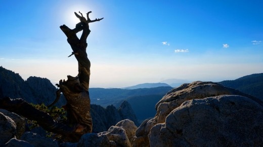 """There is something magical and mystical in this Raridon photo, """"Old Dead Tree."""" It's as if the tree is posing in a sun salutation, worshipful, unbending and still. Photo by Don Raridon"""
