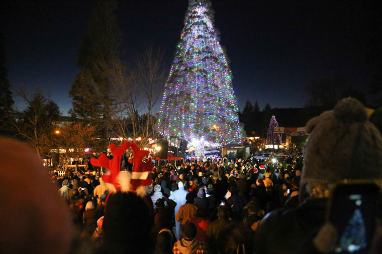 Lights adorn the Idyllwild Christmas Tree Saturday before another huge crowd. In the background is the Children's Christmas Tree. Photo by Cheryl Basye