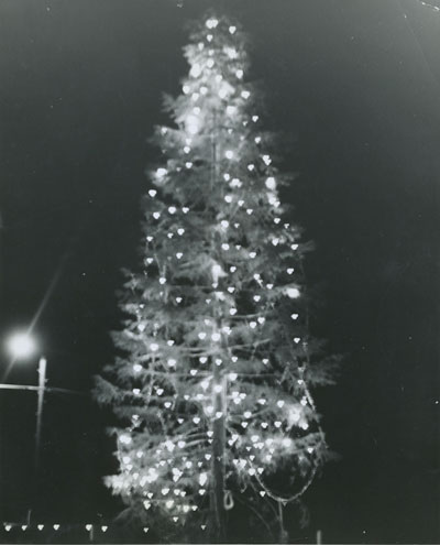 Idyllwild's community Christmas tree in 1962 stood in front of Gray's Photo Shop (now Merkaba's). It died from beetles.File photo