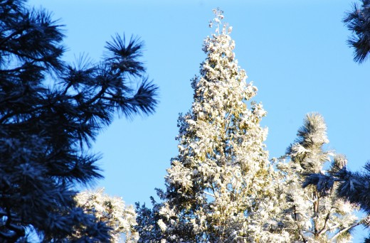 Monday's snow and Tuesday's sun brighten the landscape in Idyllwild.Photo by JP Crumrine