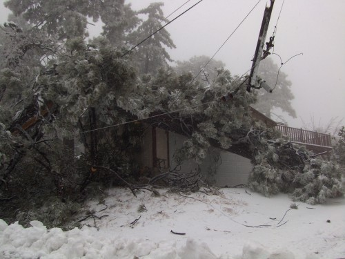 This tree toppled on roof of Pine Cove house.