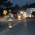 Horse death on highway mars weekend