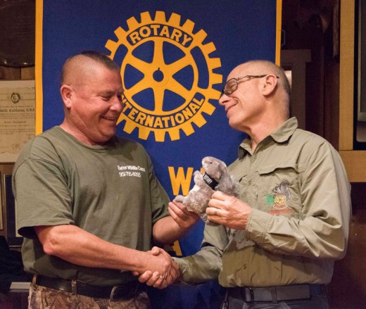 "Tracy Philippi (left) spoke to Idyllwild Rotary last week about how to handle all the various less-desirable species found on the Hill in a positive (humane and efficient) manner that also is safe. President Chuck Weisbart gave Tracy one of the ""official"" Idyllwild Rotary fuzzy tails of his very own. Photo by Tom Kluzak"