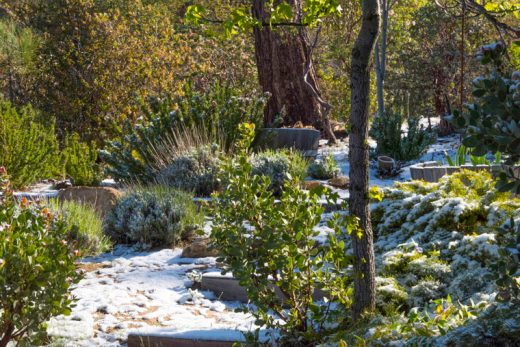 "Tuesday morning, April 26, Idyllwild awoke to a light snow covering. ""Every little bit helps,"" said photographer Tom Kluzak. Photo by Tom Kluzak"