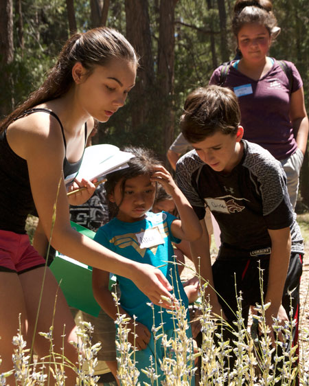 Jr. Naturalist McKenzie Nunez (left) identifies lupines in the wild with Nature Center visitors Alice Estrada and Christopher Watson and fellow Jr. Naturalist Jessica Ruelas (right, background) last Saturday. Photo by John Drake