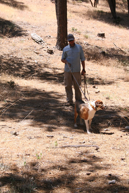 Erick Briggs, a owner/head trainer with Natural Solutions, gives Riley rattlesnake avoidance training at AstroCamp on Sunday.Photo by Becky Clark