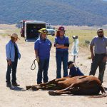 Horse trapped in ravine rescued after two days