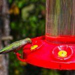 Feeding Idyllwild hummingbirds during winter
