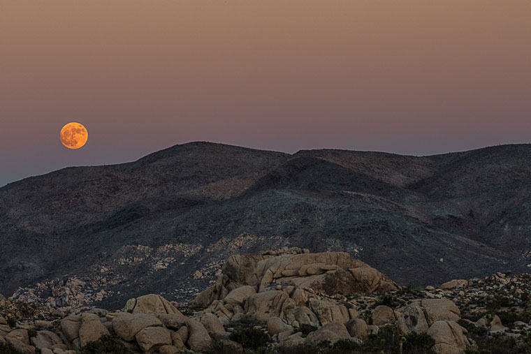 Monday night, Nov. 14, a super moon appeared on the Idyllwild horizon. A super moon is when a full moon appears and its orbit is closest to the Earth, magnifying its apparent size. The next super moon will be Nov. 25, 2034.Photo by Peter Szabadi