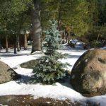 Readers Write: December 15, 2016: Stolen Tree