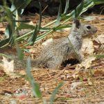 Hantavirus identified in rodents near Beaumont