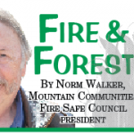 Fire and Forest: Springtime in the Mountains …