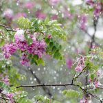 Spring rain, cold temps dampen May flowers