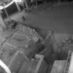 Bear caught on video in Fern Valley