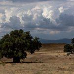 Rain or no rain — wildfire a continuing threat