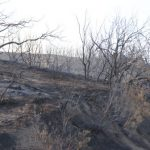 Scenes from the burned areas