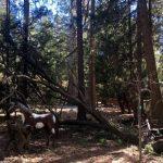 Limb knocks out power near Saunders Meadows