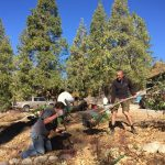 Young Idyllwild Demonstration Garden grows