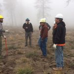 U.S. Forest Service and volunteers replanting trees in burn area