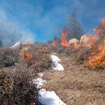 Pile burning on Westridge
