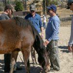 Veterans heal at War Horse Creek
