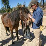 War Horse Creek to host Veteran Town Hall
