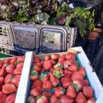 Farmers Market moves to HELP Center