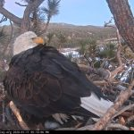 Second egg laid at bald eagle nest in Big Bear