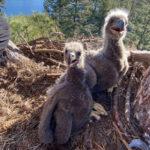 Lake Hemet has two new residents