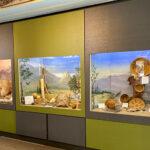 Idyllwild Nature Center receives some TLC