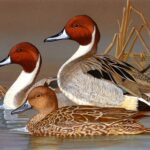 CDFW seeks artists to enter annual California Duck Stamp Art Contest