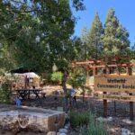 Summer gardening classes offered at Idyllwild Community Garden
